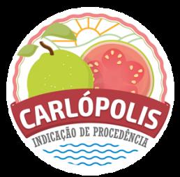 CARLÓPOLIS – GOIABA